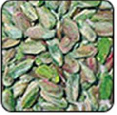 Pistachios Perfect Green